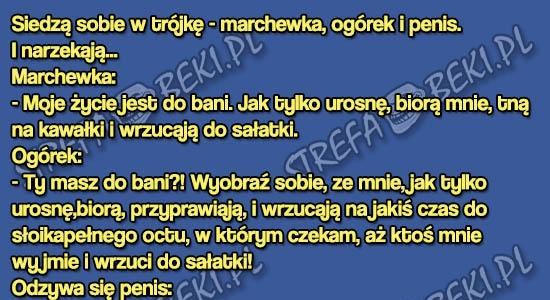 RODZAJE CZЈONKУW MКSKICH - Mкїczyјni, Motocykle, Porady - Logopl